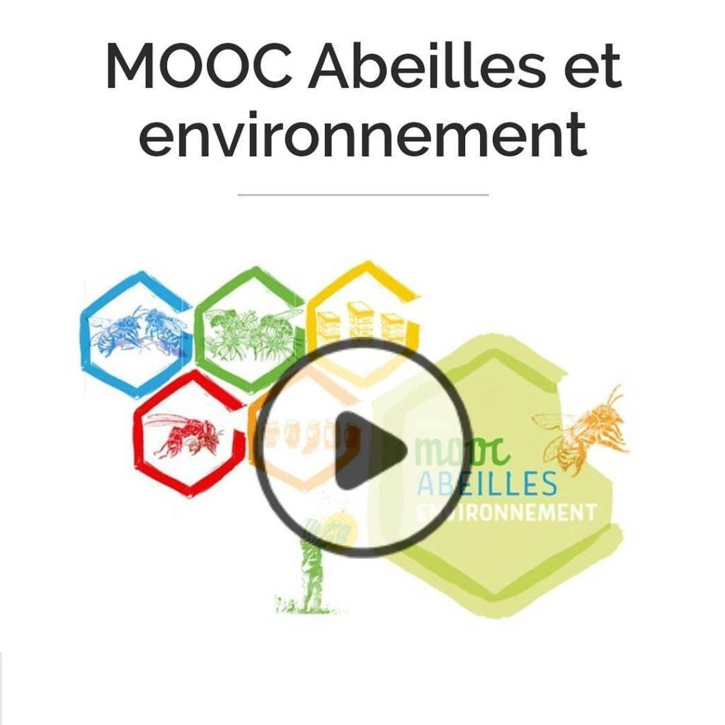 """""""Abeilles et environnement"""" : une formation gratuite et en ligne"""