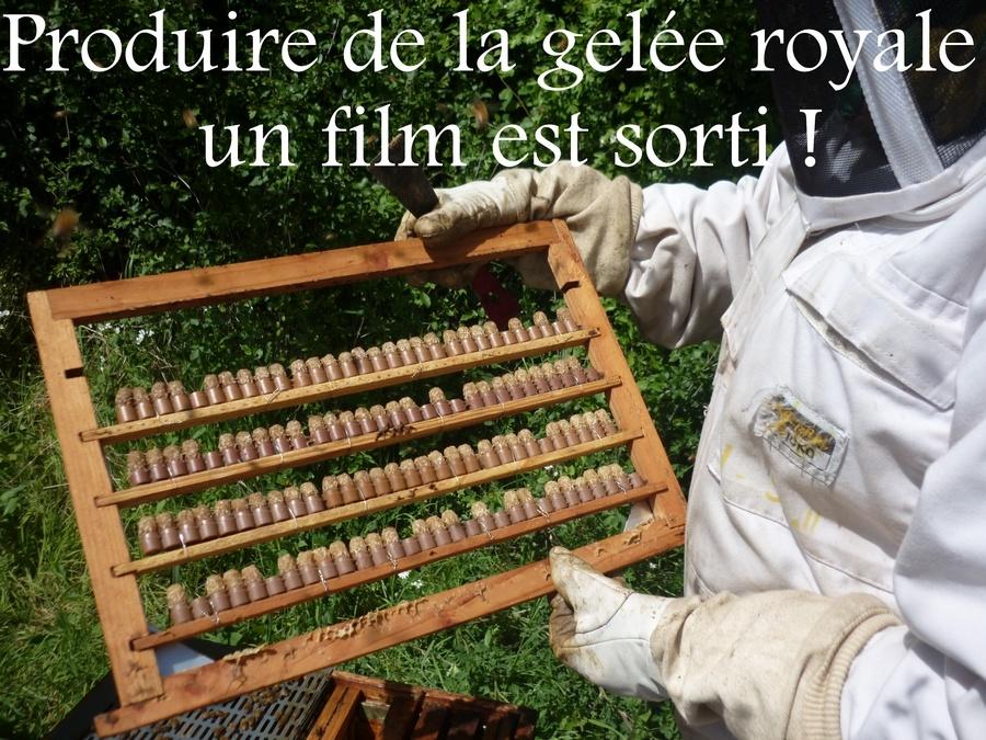 Réédition du film de formation à la production de gelée royale !